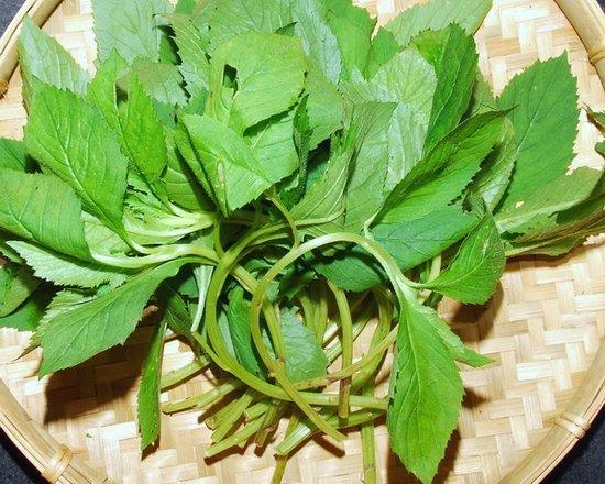 福建福州厨师培训学校推荐几款野菜食谱苦,让你吃出健康