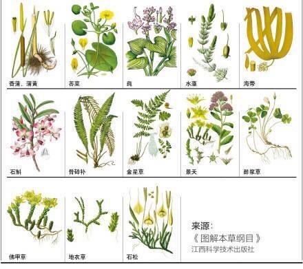 148种中草药图谱